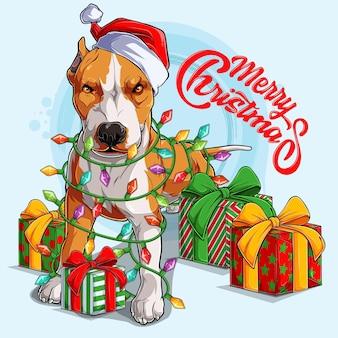 Pit bull pies w czapce świętego mikołaja stoi i otoczony lampkami choinkowymi i prezentami po bokach