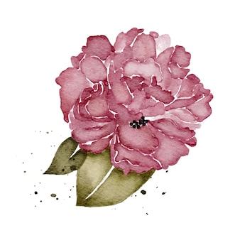 Piwonie fioletowy kwiatowy akwarela