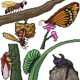 Pixel art zestaw izolowanych gatunków owadów