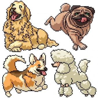 Pixel art zestaw izolowanych psów domowych
