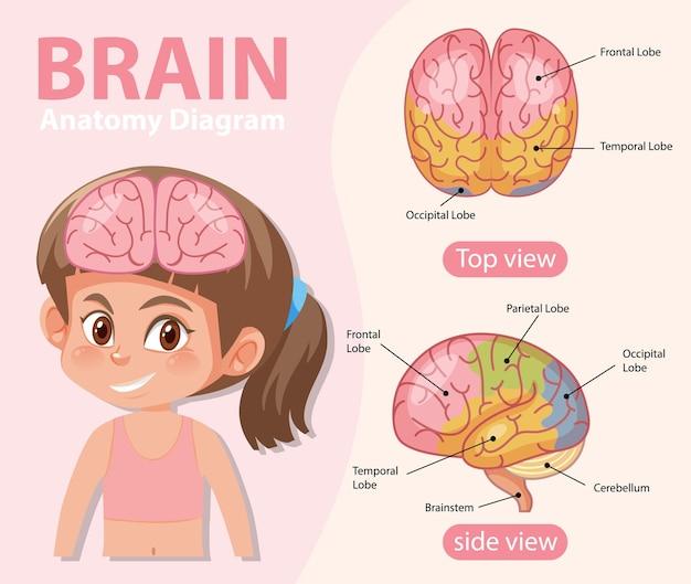 Plakat informacyjny przedstawiający schemat ludzkiego mózgu