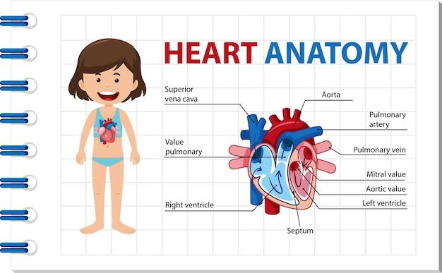Plakat informacyjny przedstawiający schemat ludzkiego serca
