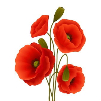Plakat kwiat maku