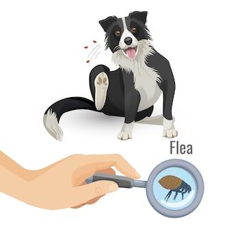 Plakat pchły z drapiącym psem i owadem. ludzka ręka trzyma szkło powiększające pozwalające zobaczyć pasożyta. zbliżenie szkodliwego organizmu zwierzęcia