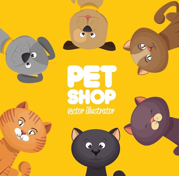 Plakat pet shop słodkie koty żółte tło