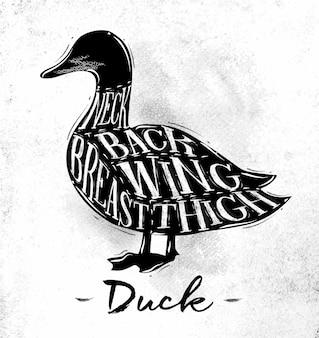 Plakat schemat cięcia kaczki napis szyi tył skrzydło piersi udo w stylu vintage