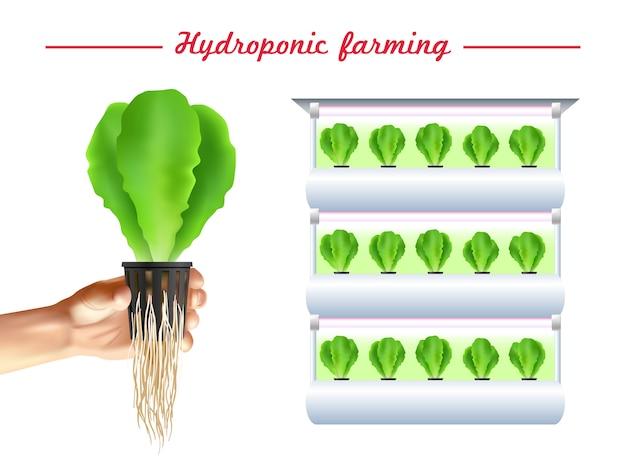 Plakat systemu hydroponicznego