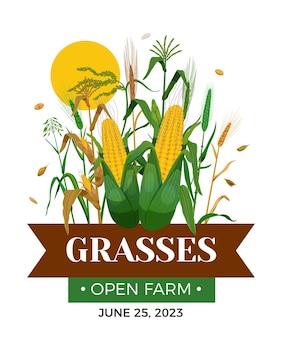 Plakat traw zbożowych z kłosami pszenicy kukurydza owies kolby jęczmienia