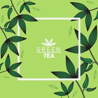 Plakat z napisem zielonej herbaty z listkami i kwadratową ramką