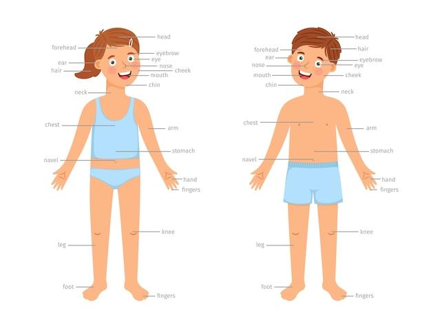 Plansza części ciała dzieci. wektor infografiki edukacji ludzkiego ciała z kreskówki chłopiec i dziewczynka dzieci oraz etykiety tekstowe na białym tle