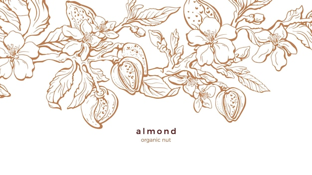 Plantacja migdałów. gałąź natury, orzech, liść. ilustracja kwiatowy.