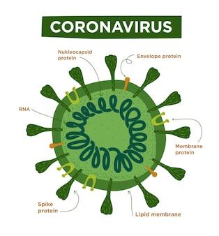 Płaska ilustracja struktur i anatomii koronawirusa oznaczona morfologią covid19