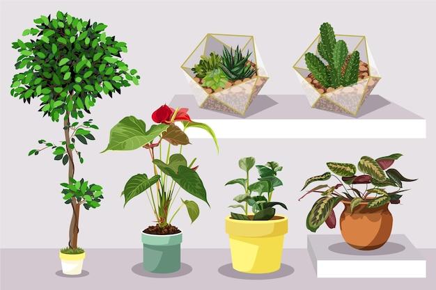 Płaska roślina doniczkowa w zestawie doniczek
