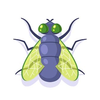 Płaska zielona mucha na białym