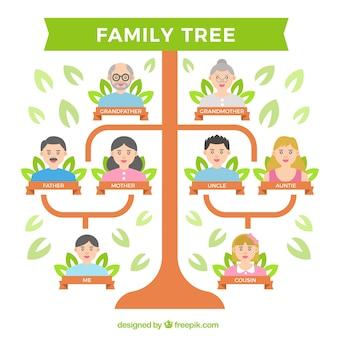Płaski drzewo genealogiczne z kilku pokoleń