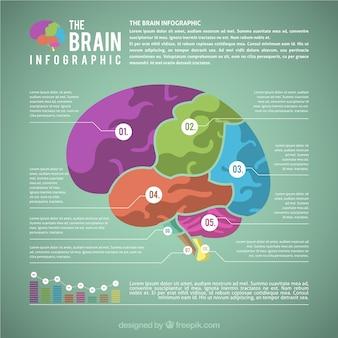 Płaski infografika kolorowych mózgu