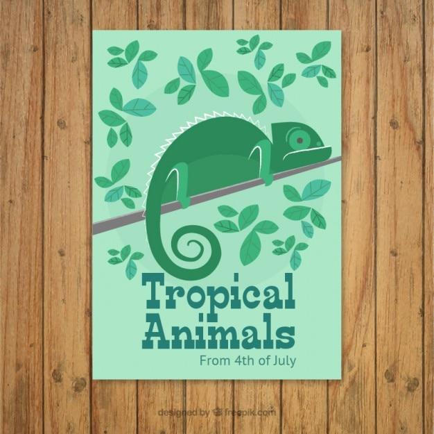 Płaski kameleona broszura