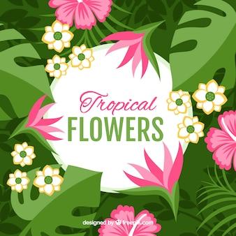 Płaski projekt różowy kwiat tropikalnych tle