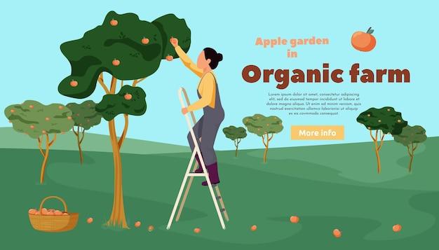 Płaski transparent gospodarstwa ekologicznego z drzewami krajobrazu na zewnątrz i kobietą zbierającą jabłka w ogrodzie