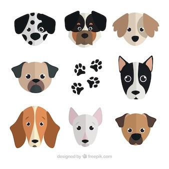Płaski zbiór pięknych psów