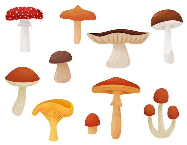 Płaski zestaw grzybów. grzyby jadalne i trujące. naturalne produkty.