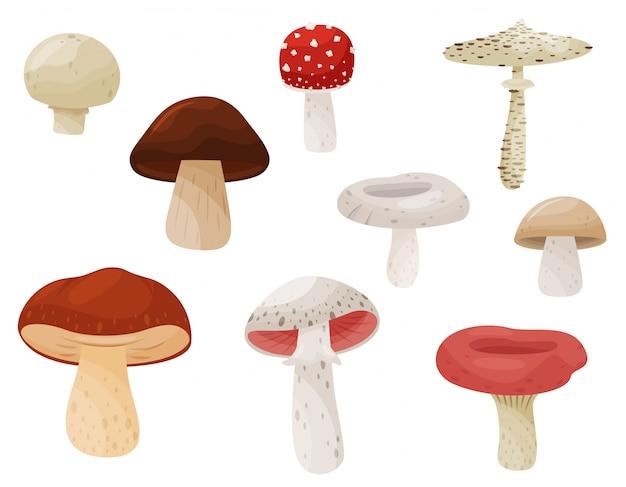 Płaski zestaw grzybów. roślina leśna. grzyby jadalne i trujące. naturalny produkt.