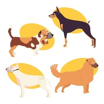 Płaski zestaw psów w kagańcu