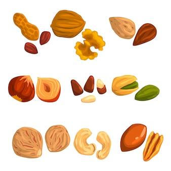 Płaskie ikony orzechów i nasion. orzech laskowy, pistacja, orzechy nerkowca, gałka muszkatołowa, orzech, brazylia, orzechy pekan, orzeszki ziemne i migdały. jedzenie organiczne. odżywianie wegetariańskie
