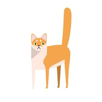 Płaskie ilustracji wektorowych rasy zwierząt domowych kreskówka. rasowy charakter kota singapura na białym tle. kolorowe zwierzę kotek ssak.