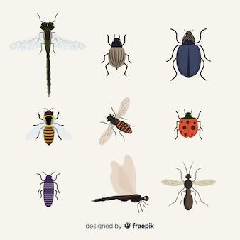 Płaskie opakowanie owadów