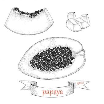 Plasterek papai i pół. tropikalna owoc odizolowywająca na białym tle. zestaw graficzny.