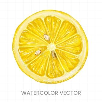Plastry cytryny pomalowane akwarelą na białym tle
