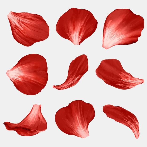 Płatki kwiatów element wektor zestaw czerwona róża