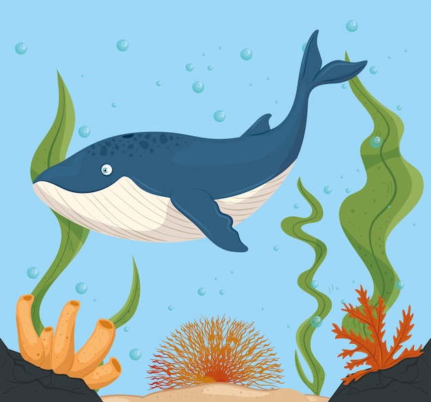 Płetwal błękitny i morskie życie w oceanie, mieszkańcy światów morskich, urocze stworzenia podwodne, fauna podwodna