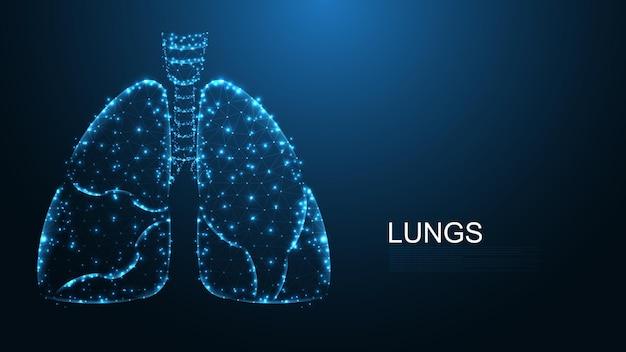 Płuca o budowie anatomii człowieka połączenie linii