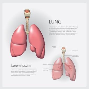 Płuco z szczegółu wektoru ilustracją