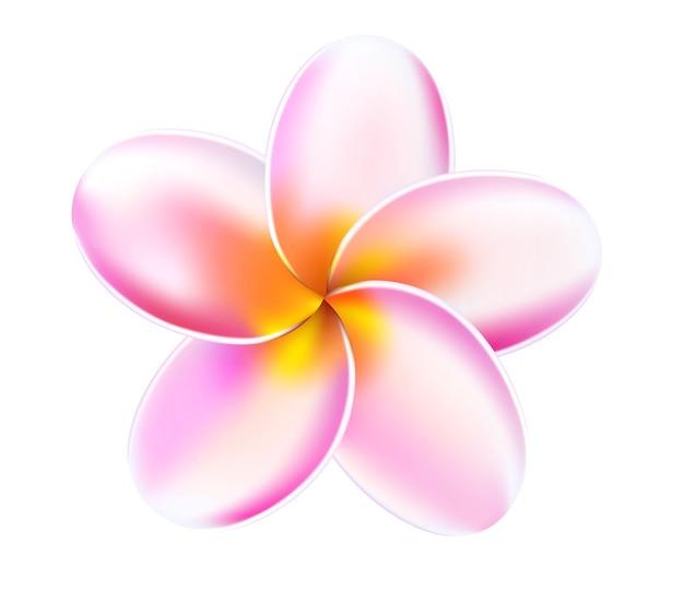 Plumeria tropikalny kwiat ilustracja