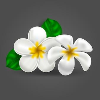 Plumeria tropikalny realistyczny kwiat hawajski wektor
