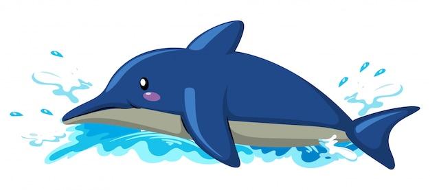 Pływający delfin na białym tle