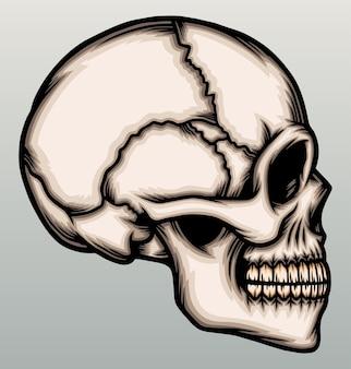 Po stronie głowy ludzkiej czaszki.