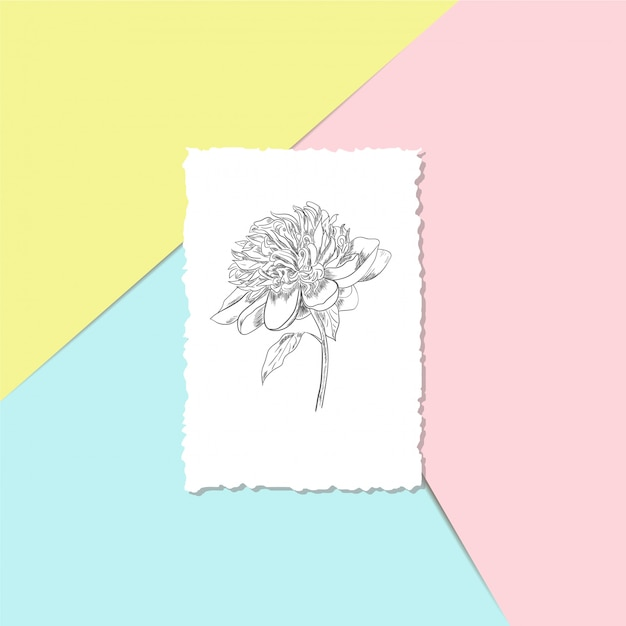 Pocztówka z piwonią