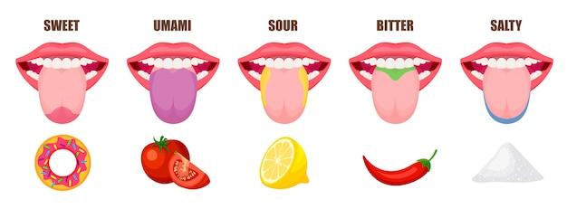 Podstawowe obszary smaku ludzkiego języka. pięć stref smakowych w ustach - słodki, słony, kwaśny, gorzki i umami. edukacyjna, schematyczna ilustracja odizolowywająca na białym tle.