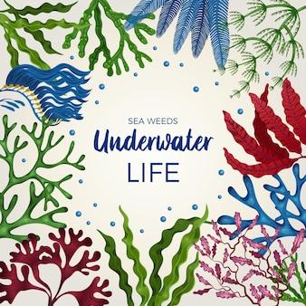 Podwodne życie kolorowe dekoracyjne kwadratowe tło ramki z brązowymi zielonymi algami czerwonymi płaskimi wodorostami