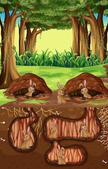 Podziemna nora z wieloma brązowymi królikami