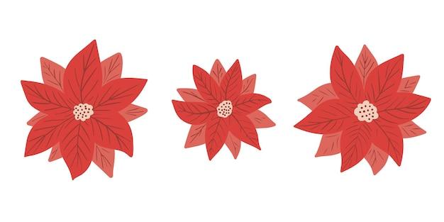 Poinsettia christmas star kolekcja kwiatów w prostym, ręcznie rysowanym stylu na białym backgro