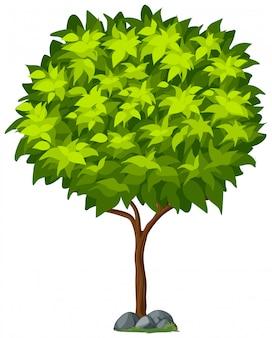 Pojedyncze drzewa na białym tle