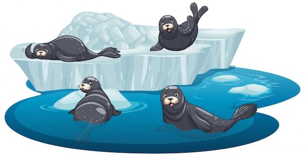 Pojedyncze foki na lodzie