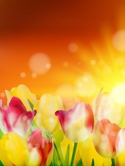 Pola tulipanów pod niebo zachód słońca.