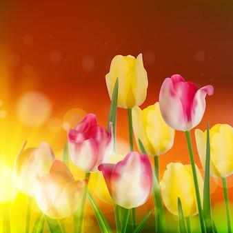 Pola tulipanów podczas zachodu słońca.