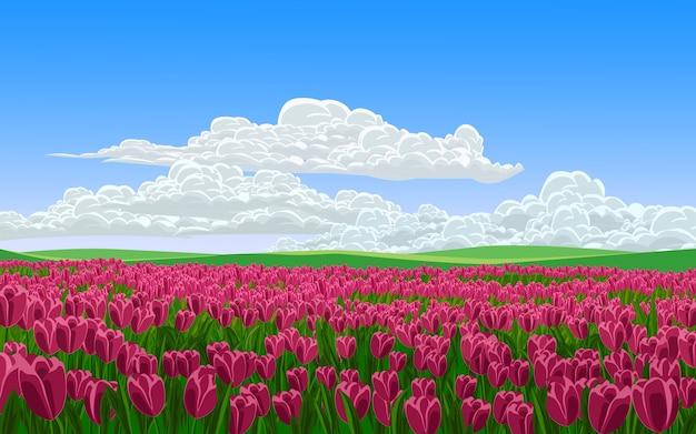 Pole kwiatów tulipanów w słoneczny dzień